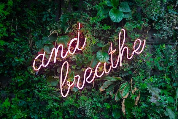 'Breathe' in neon letters tegen een achtergrond van bladeren.  Foto van Max van den Oetelaar.